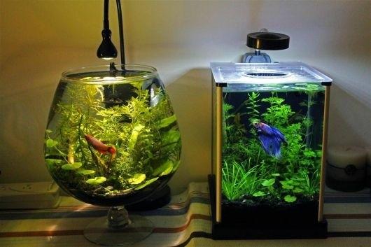 Ho Ca De Ban Aquarium