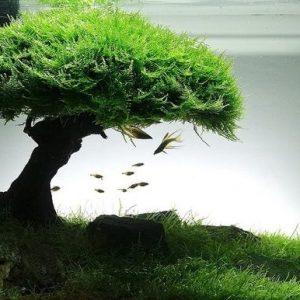 Hồ Thủy Sinh Bonsai – Những điều cần biết cho người mới chơi