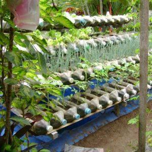 35 cách để tái chế chai nhựa trồng cây siêu cool cho mọi nhà